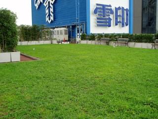 雪印メグミルク 本社