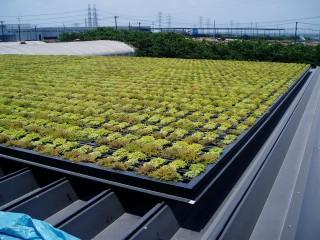 中部飼料㈱工場折半屋根緑化(神栖市)