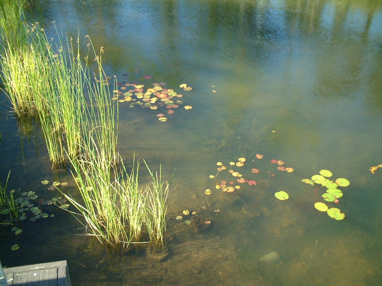 札幌ドーム調整池