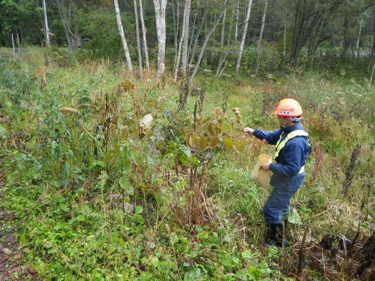 ダム工事現場での地域性種苗の育成A