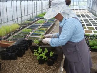 ダム工事現場での地域性種苗の育成B