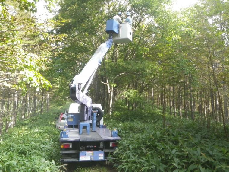 国立公園内の自然再生事業、地域性種苗の育成