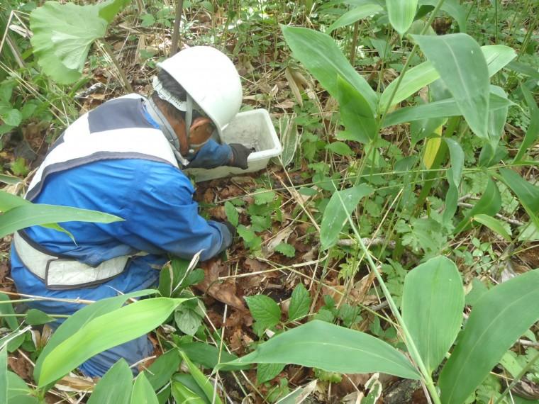 道路建設現場での保全、地域性種苗の育成