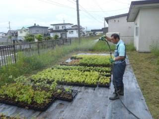 地域性種苗の育成、森づくり