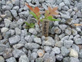 ゆったり館周辺森づくり事業 地域性種苗の育成、森づくり
