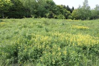 野幌運動公園、地域性種苗での都市緑化