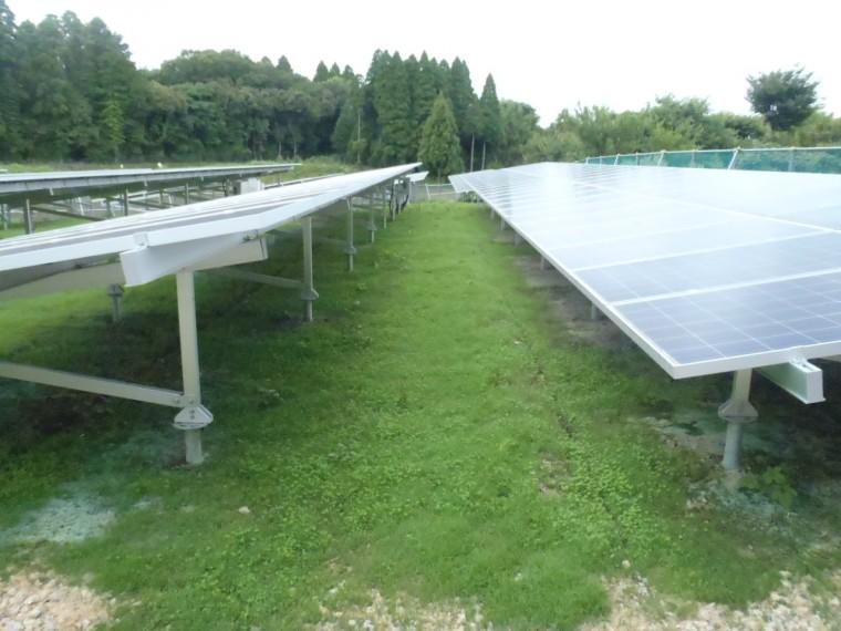 太陽光発電施設緑化