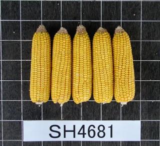 スノーデント 115(SH4681)
